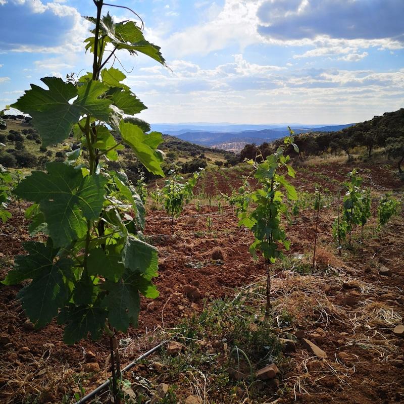 el peco vinos de montaña