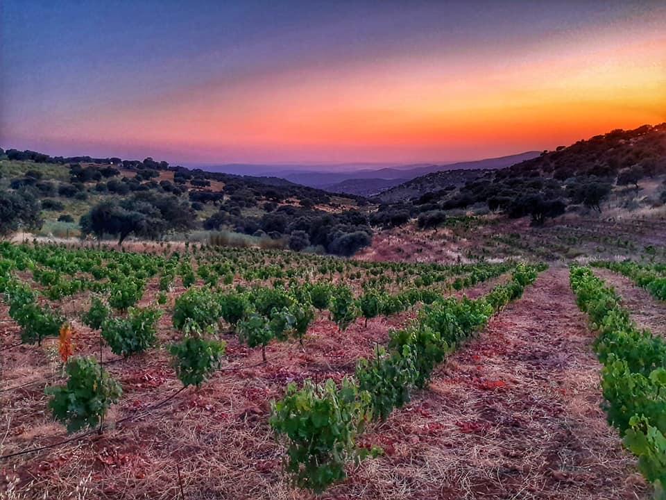 ruta por viñedos